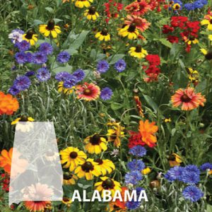Alabama-Wildflower-Seeds.jpg