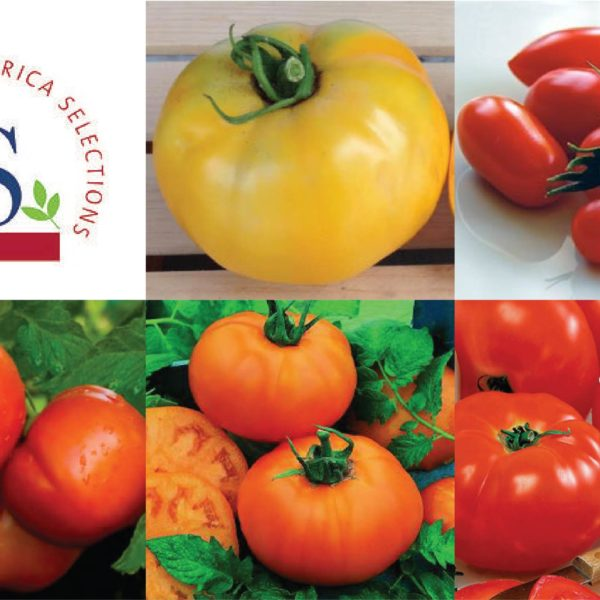 All American Selection Collection, Tomato Seeds