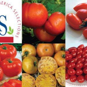 All-American-Selection-Tomato-Collection.jpg