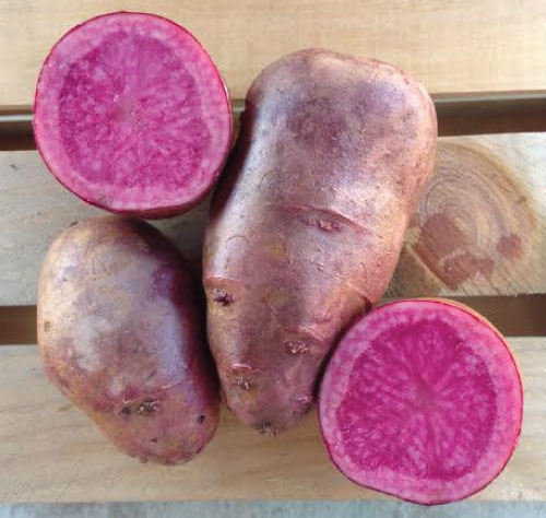 All Red Seed Potato Cut