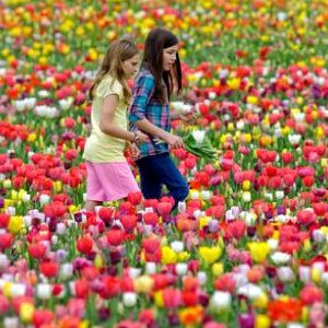 All-Season-Long-Lasting-Tulip-Mix-Bulbs.jpg
