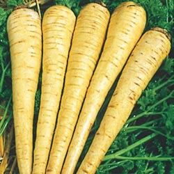 all_american_parsnip
