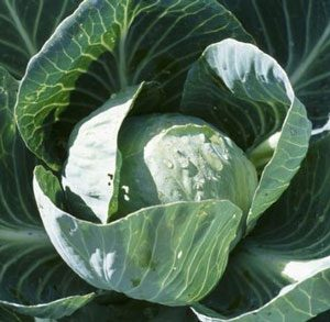 All_Seasons_Cabbage_Seed.jpg