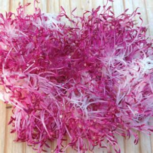 Amaranth-Sprout-Seeds.jpg