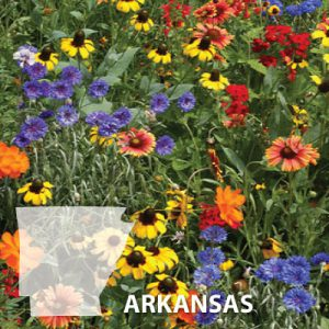 Arkansas-Wildflower-Seeds.jpg