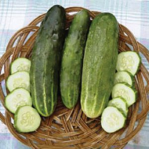 ashley-cucumber-seeds