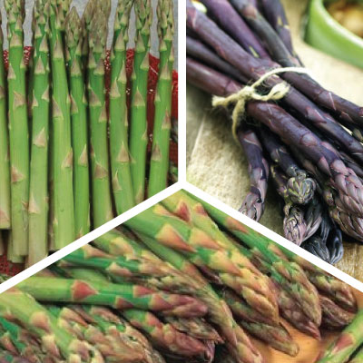 Popular Mix Asparagus Roots Urban Farmer Seeds