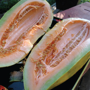 Banana-Melon-Seeds.jpg