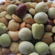 Bean-Sprout-Seed-Mix.jpg