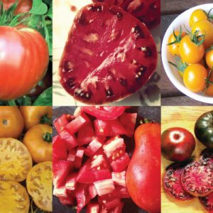 Best-Tasting-Tomatoes-Collection.jpg