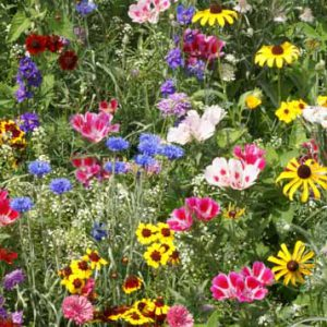 Bird_and_Butterfly_Wildflower_Seed_Mix.jpg