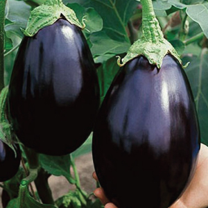 Black-Beauty-Eggplant-Seeds.jpg