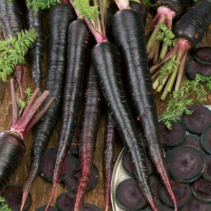 Black Nebula Carrot Seeds