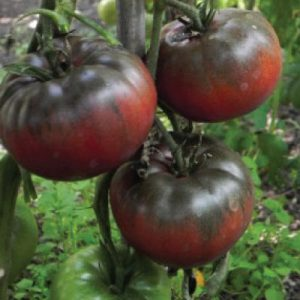 Black-from-Tula-Tomato-Seeds.jpg