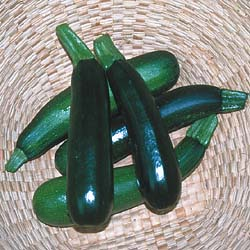 Black_Beauty_Zuchini.jpg