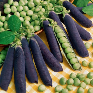 Blue Shelling Pea Seeds