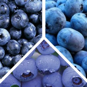 Blueberry-Plant-Mix.jpg