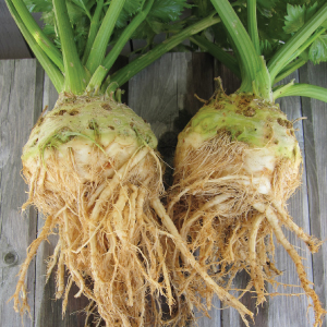 Brilliant-Celeriac-Seeds.jpg