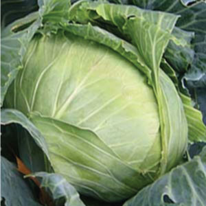 Brunswick-Cabbage.jpg