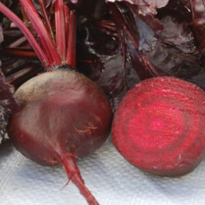 Bulls_Blood_Beet_Seeds1