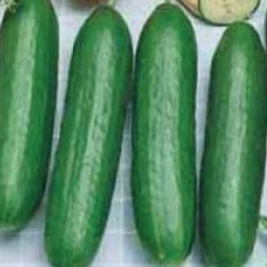 Burpless-Bush-Slicer-Cucumber-Seeds.jpg
