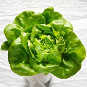 Butter-King-Lettuce-Seeds