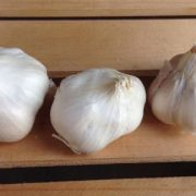 California-Early-Garlic.jpg