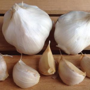 California-Early-Garlic-Bulb-Seeds.jpg