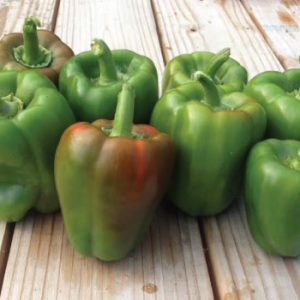 California-Wonder-Bell-Peppers1