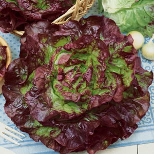 Carmona Red Lettuce Seeds