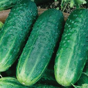 Carolina-Cucumber-Seeds.jpg