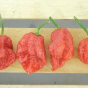 Carolina-Reaper-Pepper-Plants.jpg