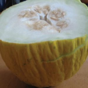 Casaba-Melon-Seeds.jpg