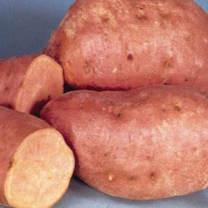 Centennial-Sweet-Potato-Slips.jpg