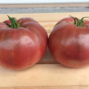 Cherokee-Purple-Tomatoes.jpg