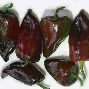 Chili-Pepper-Mulato-Isleno-50-seeds