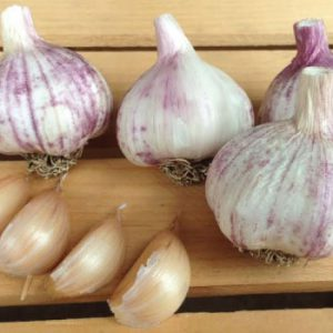 Chinese-Pink-Garlic-Cloves.jpg