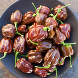 Chocolate-Scotch-Bonnet-Pepper-Seeds