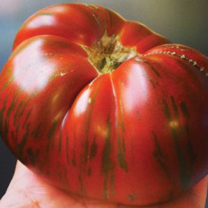 Chocolate-Stripe-Tomato-Seeds.jpg