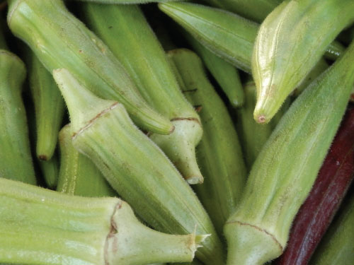 Clemson Spineless 80 Okra Seed Urban Farmer Seeds
