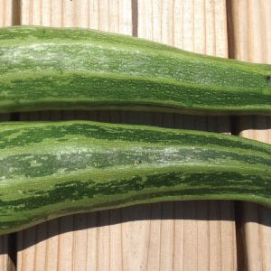 Cocozelle-Zucchini-Seeds.jpg