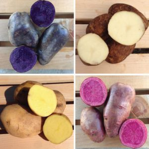 Color-Mix-Seed-Potatoes.jpg