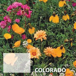 Colorado-Wildflower-Seed.jpg