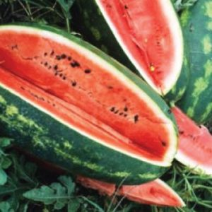 Congo-Watermelon-Seeds.jpg