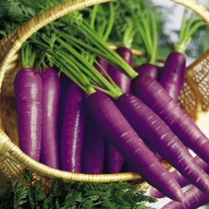 Cosmic_Purple_Carrots.jpg