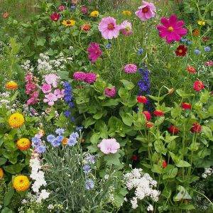 Cottage_Garden_Wildflower_Mix.jpg