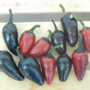 Count-Dracula-Pepper-Seeds.jpg