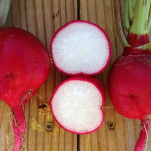 Crimson-Giant-Radish-Sliced.jpg