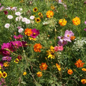 Cutflower-Wildflower-Seed-Mix.jpg