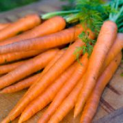 danver-126-carrot-seeds